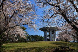 金沢自然公園(金沢動物園)の桜